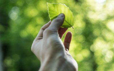 Sustentabilidade começa por S.O.S