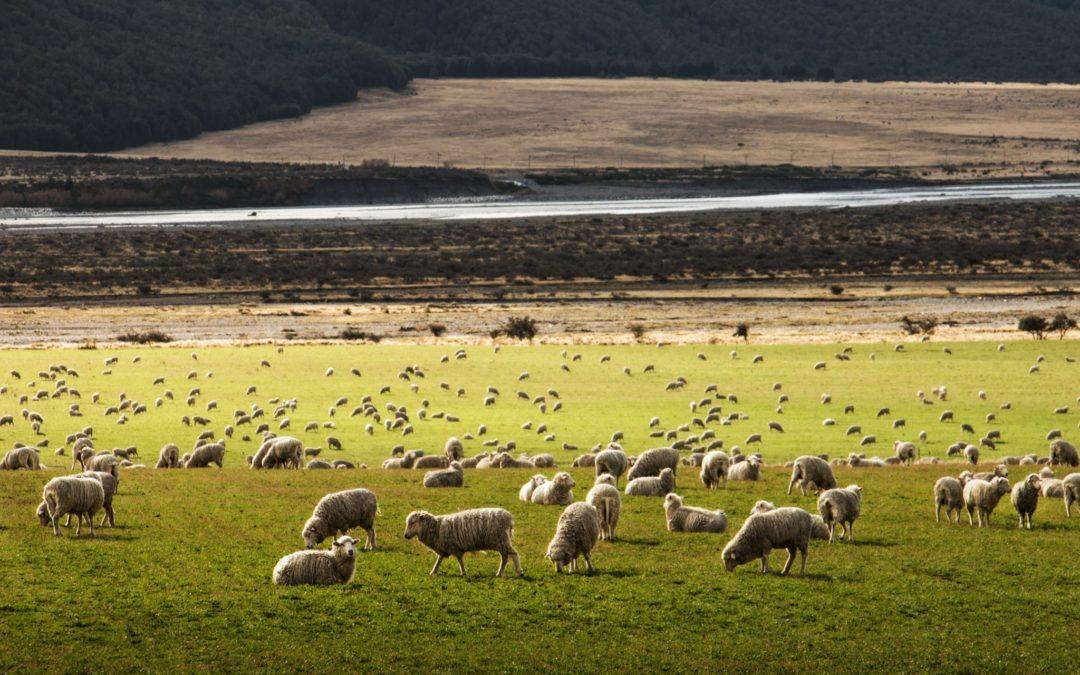 ¿Qué pasaría si desapareciese la ganadería extensiva por el Cambio Climático?