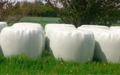 Produccion forrajera: microsilos o ensilaje en balas de plastico
